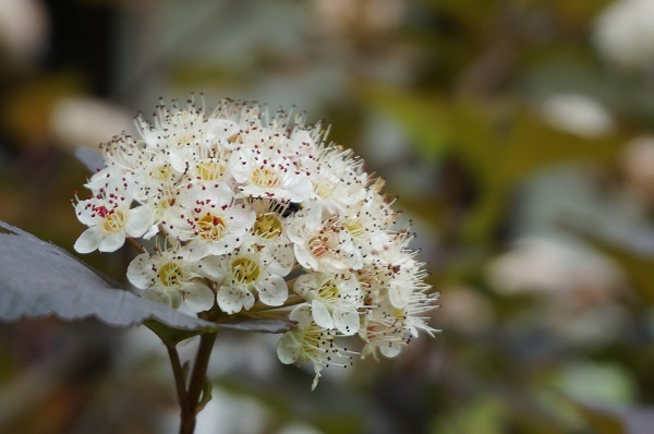 樹木のお花など_e0365880_19225386.jpg