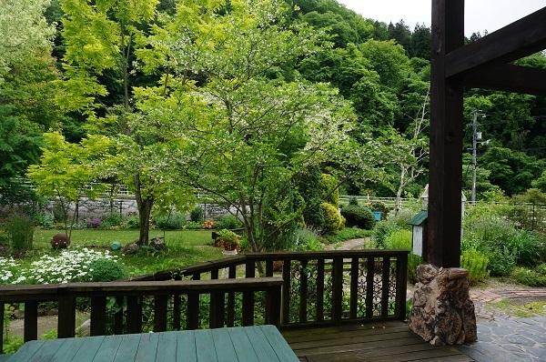 樹木のお花など_e0365880_19232771.jpg