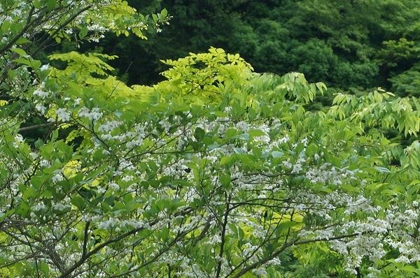 樹木のお花など_e0365880_19240236.jpg