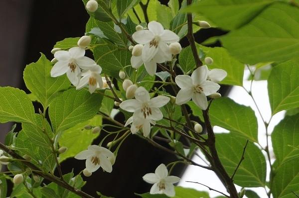 樹木のお花など_e0365880_19242863.jpg