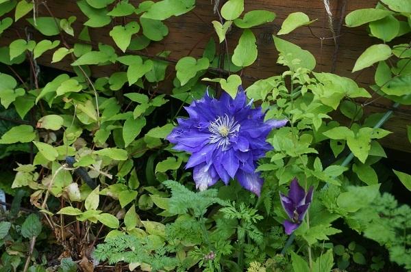 樹木のお花など_e0365880_19271550.jpg