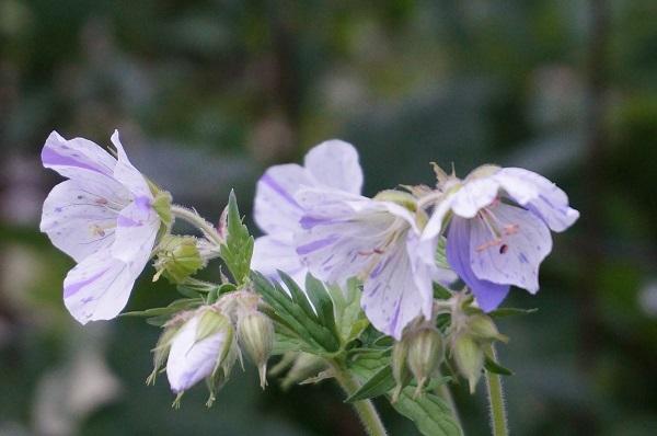 樹木のお花など_e0365880_19284292.jpg