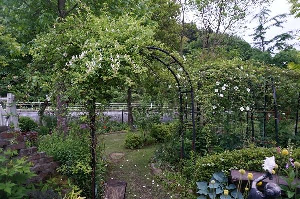 樹木のお花など_e0365880_19292952.jpg