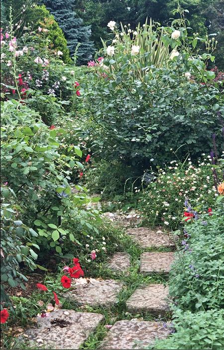 イングリッシュ(ローズ)の庭へ_c0134902_22150076.jpg