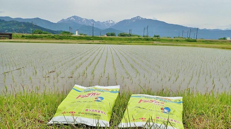 兼業農家は除草剤を散布しました_c0336902_20242664.jpg