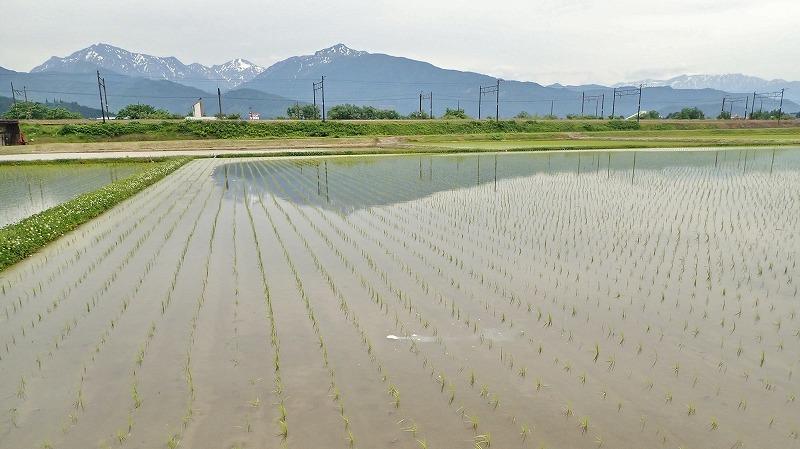 兼業農家は除草剤を散布しました_c0336902_20243067.jpg