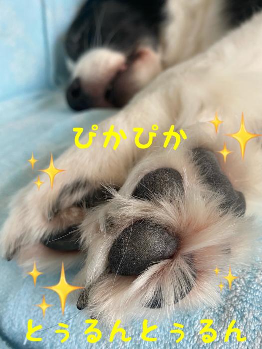 タワシ_b0215315_16264938.jpg