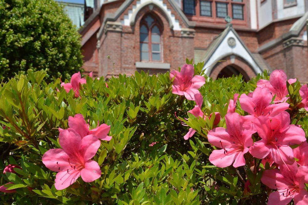 聖ヨハネ教会堂と残ったツツジの花_e0373930_21170112.jpg