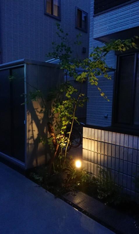 コハウチワカエデ_e0361655_08550315.jpg