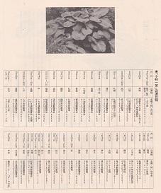8-4/30-72 舞台「小林一茶」井上ひさし作 木村光一演出 こまつ座の時代(アングラの帝王から新劇へ)_f0325673_14194035.jpg