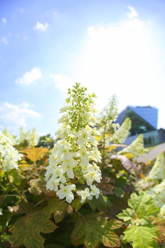国営木曽三川公園 フラワーパーク江南_f0367980_19284051.jpg