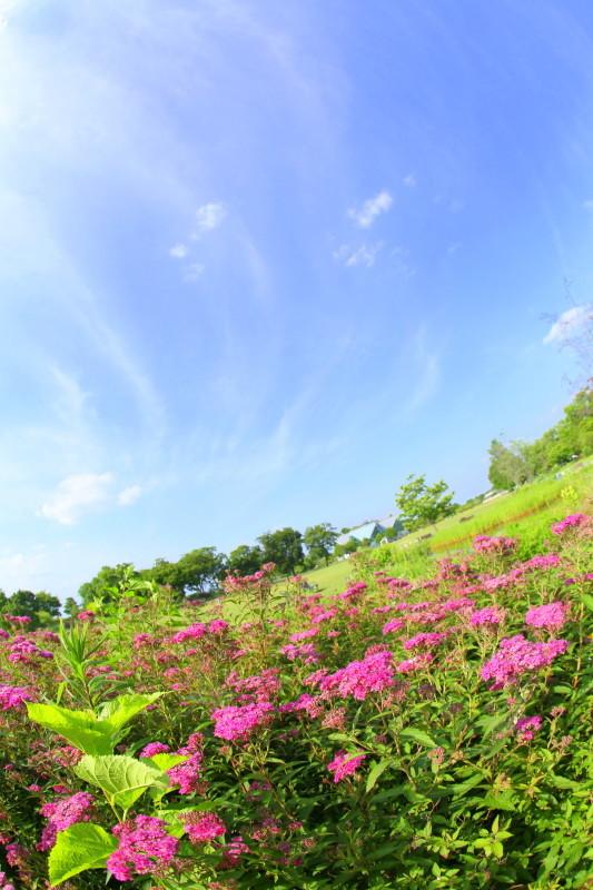 国営木曽三川公園 フラワーパーク江南_f0367980_19385104.jpg