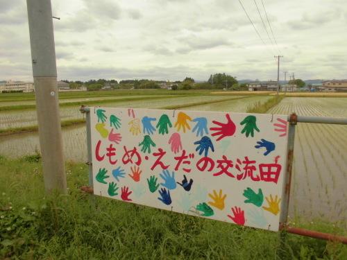 6月1日の田んぼの様子(下目黒小学校・枝野小学校)_d0247484_16465676.jpg