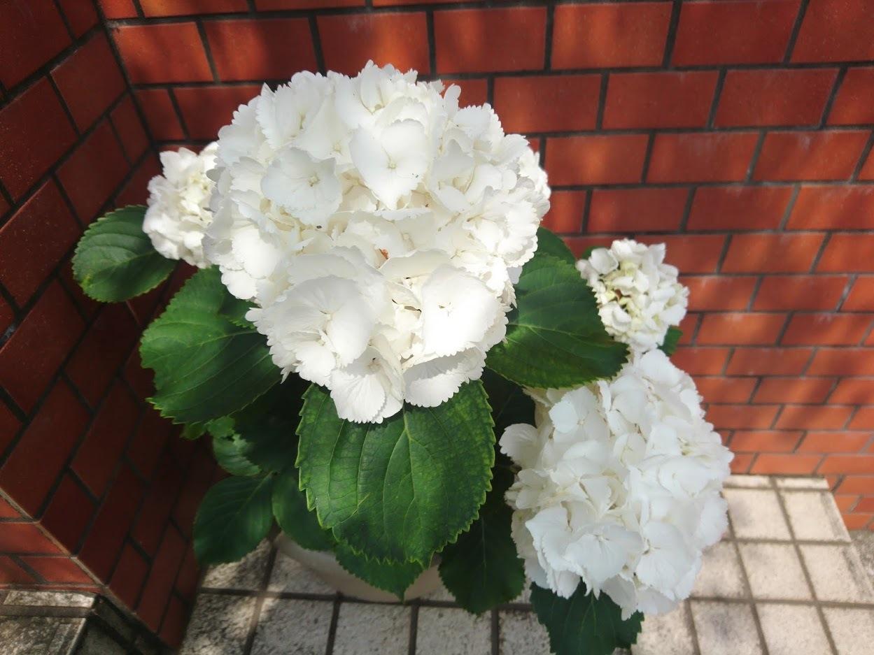 白い花_f0197985_17315895.jpg