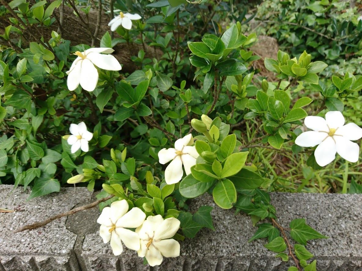 白い花_f0197985_17320633.jpg