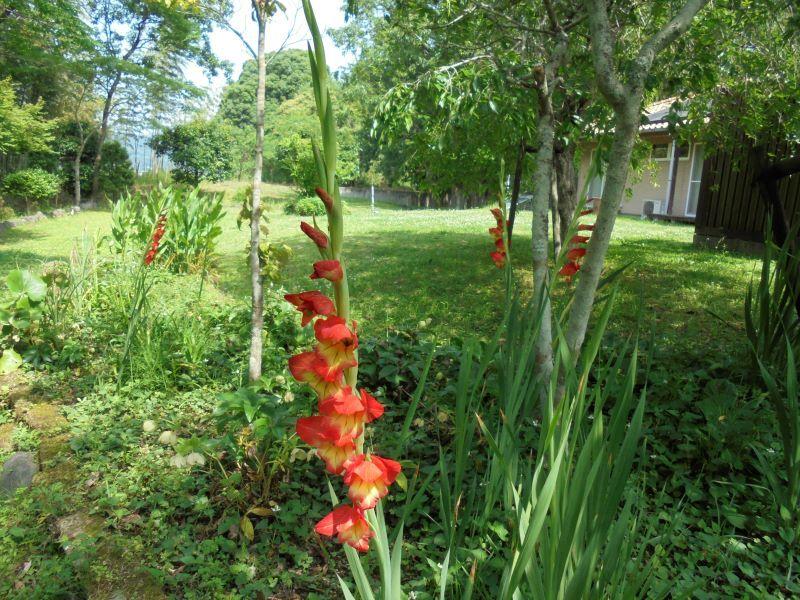 6月の庭から_a0208899_13415337.jpg