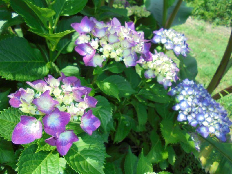 6月の庭から_a0208899_13432225.jpg