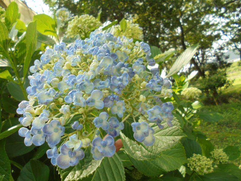 6月の庭から_a0208899_13433838.jpg