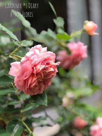 最初の春_e0365614_22385687.jpg