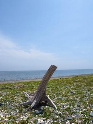 海辺のウォーキング_f0129726_20481561.jpg