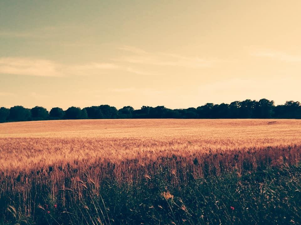 祝日の田舎散歩♪♪_b0305039_05205941.jpg