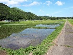 【伊豆高原 池の里山 紫陽花ロード】_e0093046_16445702.jpg