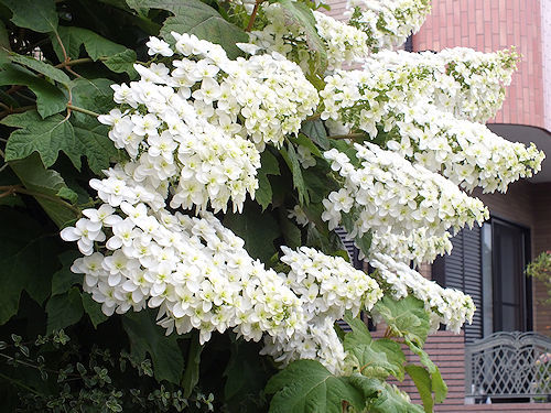 散歩で出会った花々_e0413146_19024543.jpg