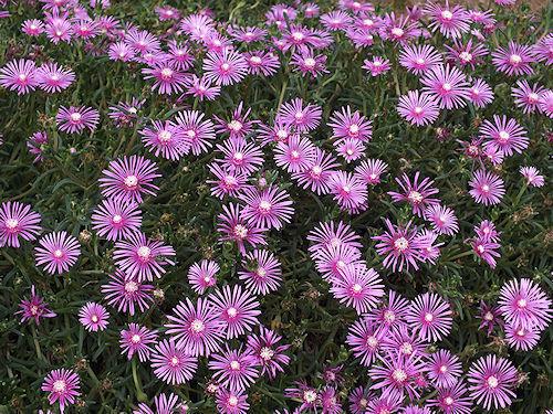 散歩で出会った花々_e0413146_19070357.jpg