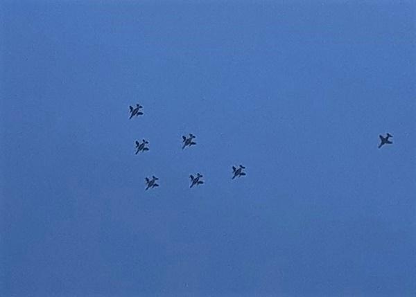 ブルーインパルスの飛行_c0019551_13024581.jpg