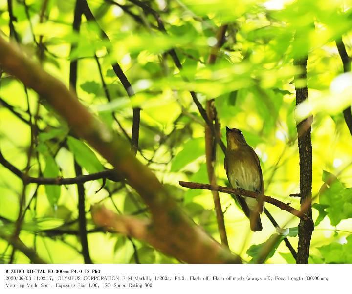 いちはらクオードの森 2020.6.3_c0062451_19002220.jpg
