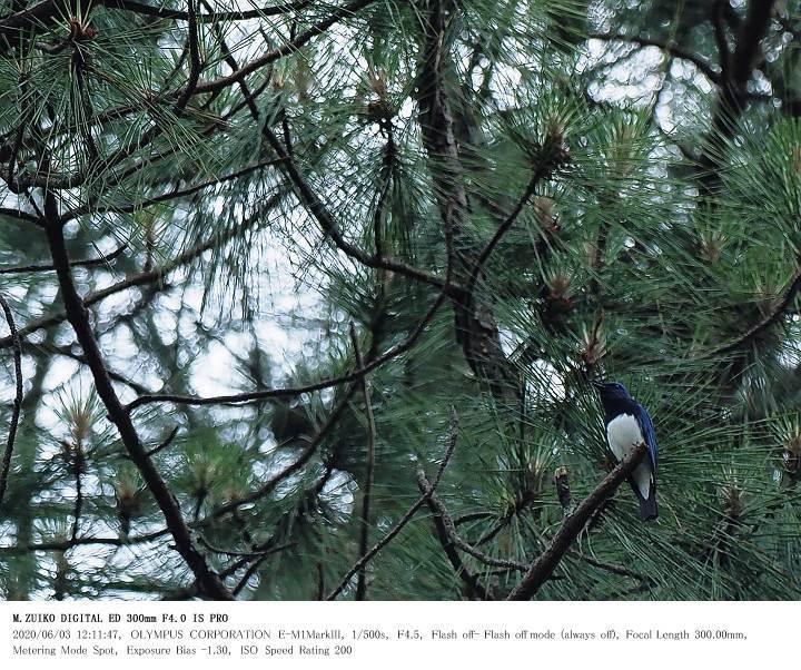 いちはらクオードの森 2020.6.3_c0062451_19021212.jpg