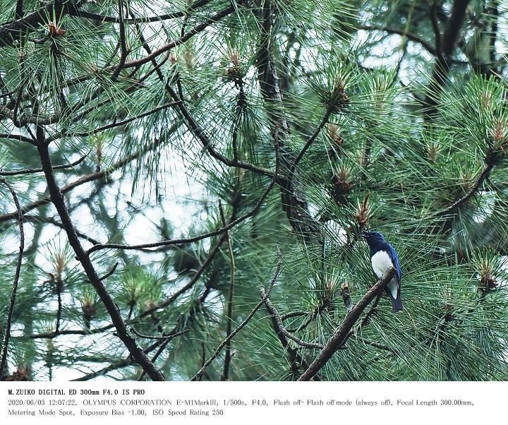 いちはらクオードの森 2020.6.3_c0062451_19021235.jpg