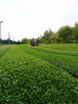 米作りの挑戦(2020) 田植え 今年は昨年よりもさらに10日早い田植えです!(前編)_a0254656_18135449.jpg