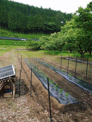 米作りの挑戦(2020) 田植え 今年は昨年よりもさらに10日早い田植えです!(前編)_a0254656_18260341.jpg