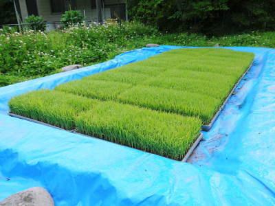 米作りの挑戦(2020) 田植え 今年は昨年よりもさらに10日早い田植えです!(前編)_a0254656_18341597.jpg