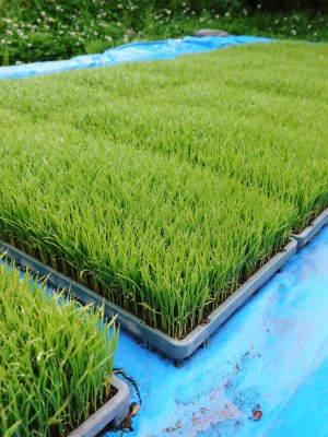 米作りの挑戦(2020) 田植え 今年は昨年よりもさらに10日早い田植えです!(前編)_a0254656_18423329.jpg