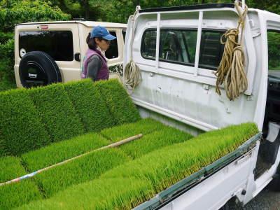 米作りの挑戦(2020) 田植え 今年は昨年よりもさらに10日早い田植えです!(前編)_a0254656_18452946.jpg
