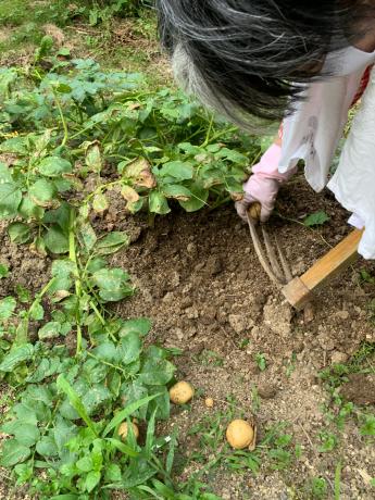 収穫祭♬_a0077071_13582910.jpg