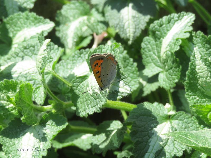 蝶の季節_f0067179_01061661.jpg
