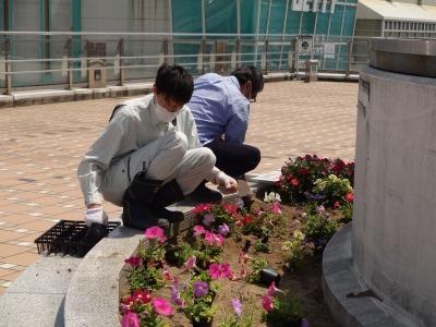 名古屋港水族館前花壇の植栽R2.5.13_d0338682_14215868.jpg