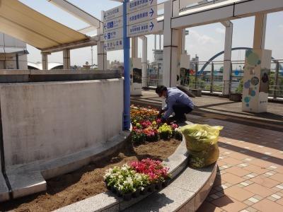 名古屋港水族館前花壇の植栽R2.5.13_d0338682_14260011.jpg
