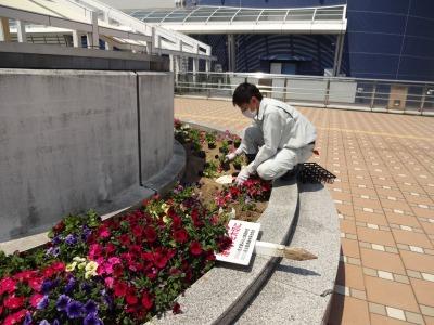 名古屋港水族館前花壇の植栽R2.5.13_d0338682_14261781.jpg