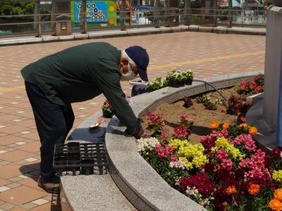 名古屋港水族館前花壇の植栽R2.5.13_d0338682_14263468.jpg