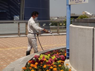 名古屋港水族館前花壇の植栽R2.5.13_d0338682_14265337.jpg