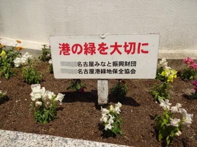 名古屋港水族館前花壇の植栽R2.5.13_d0338682_14275551.jpg