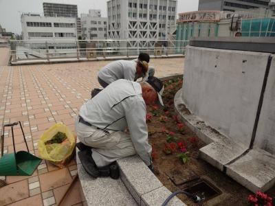 名古屋港水族館前花壇の植栽R2.6.3_d0338682_14415384.jpg