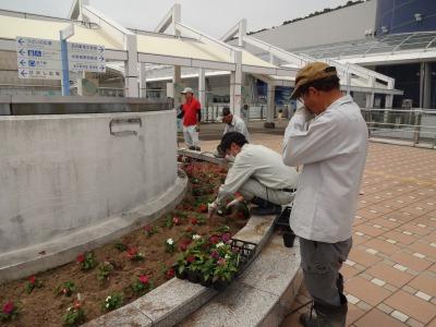名古屋港水族館前花壇の植栽R2.6.3_d0338682_14443825.jpg