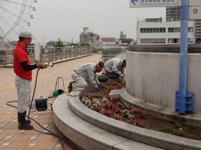 名古屋港水族館前花壇の植栽R2.6.3_d0338682_14444615.jpg