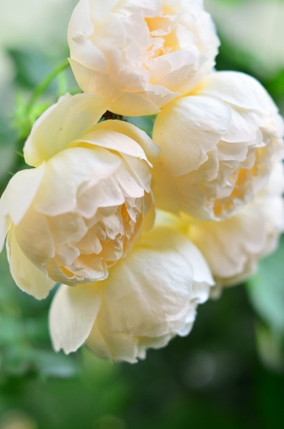 5月の庭の動画_d0025294_16194421.jpg