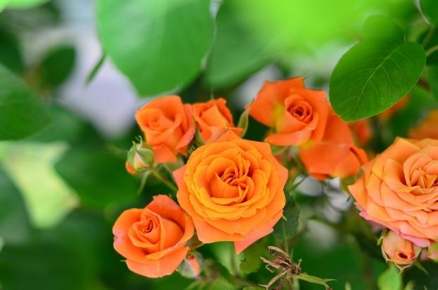 薔薇咲く庭_d0025294_16204942.jpg